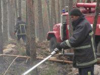 У Житомирській області локалізували два осередки лісових пожеж