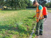 У столиці майже 100 гектарів землі обробили від небезпечної рослини, що викликає алергію