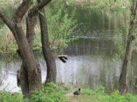 Озеро Вулик та сквер на Святошині — місця, де наведуть порядок